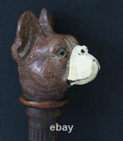 Antique 19th C Dandy Walking Stick / Cane, carved shaft & head of French Bulldog