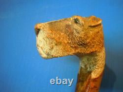 Antique Carved Scotty Dog Head Cane Walking Stick, finest ever on Ebay, Ca 1900