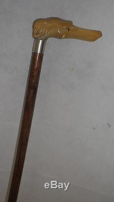 Antique Hallmarked'1944' Carved Bovine Horn, Dogs Head Top Walking Stick-85cm
