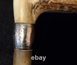 Antique Walking Stick or Cane Handle Carved Stag Horn & Sterling Silver Handle