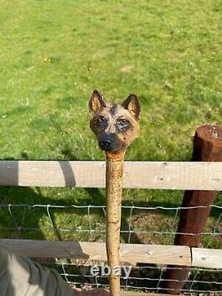 Hand Carved German Shepard Head in Lime on Hazel Shank Country Stick