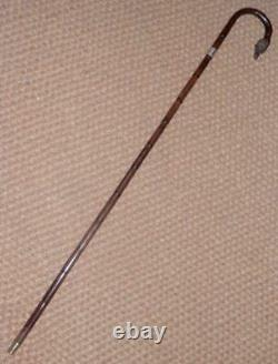 Victorian Hand-Carved Wirehaired Pointer Walking Stick/Cane Hallmark Silver 1901
